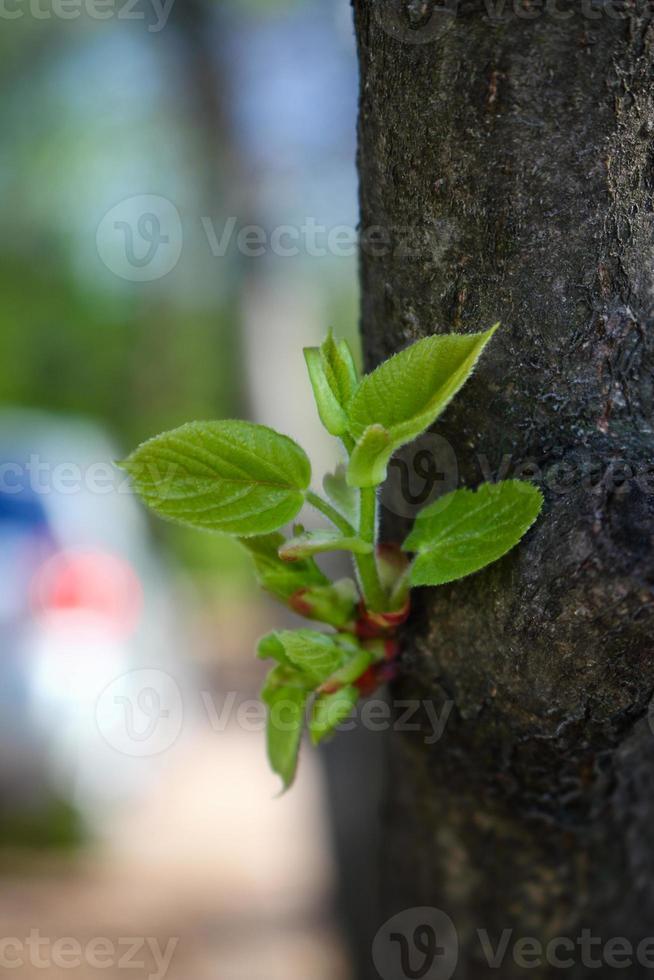 Ramita verde joven que crece en el tronco de un árbol foto