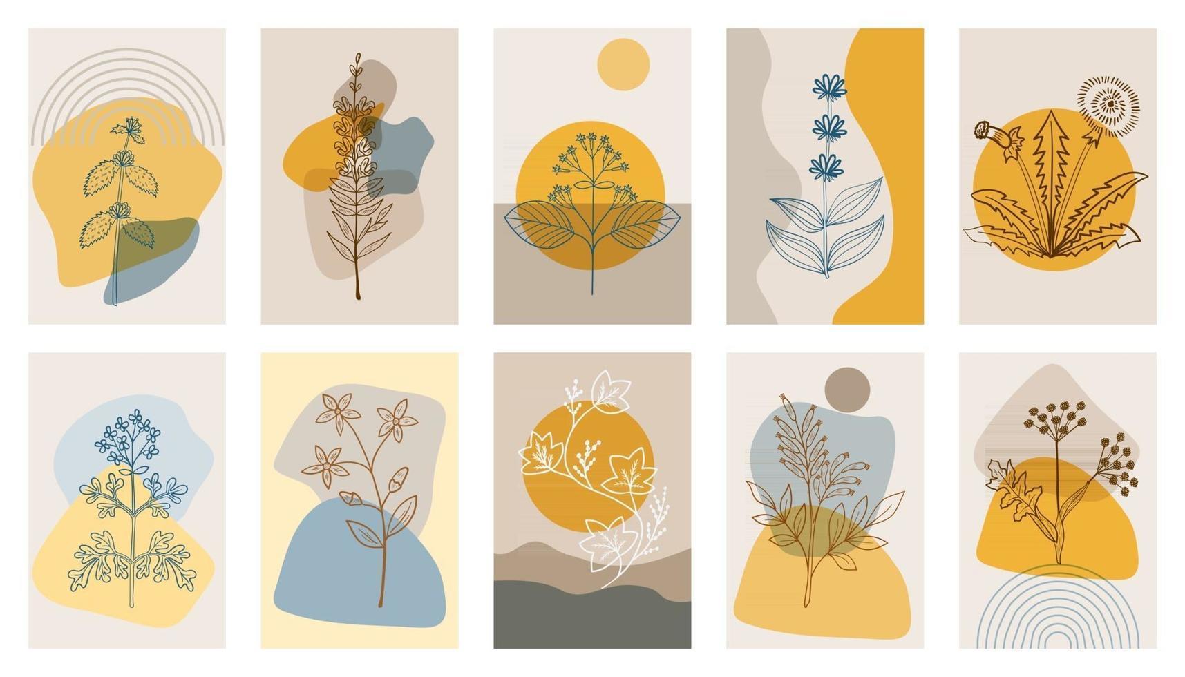 conjunto de carteles abstractos de hierbas amargas vector