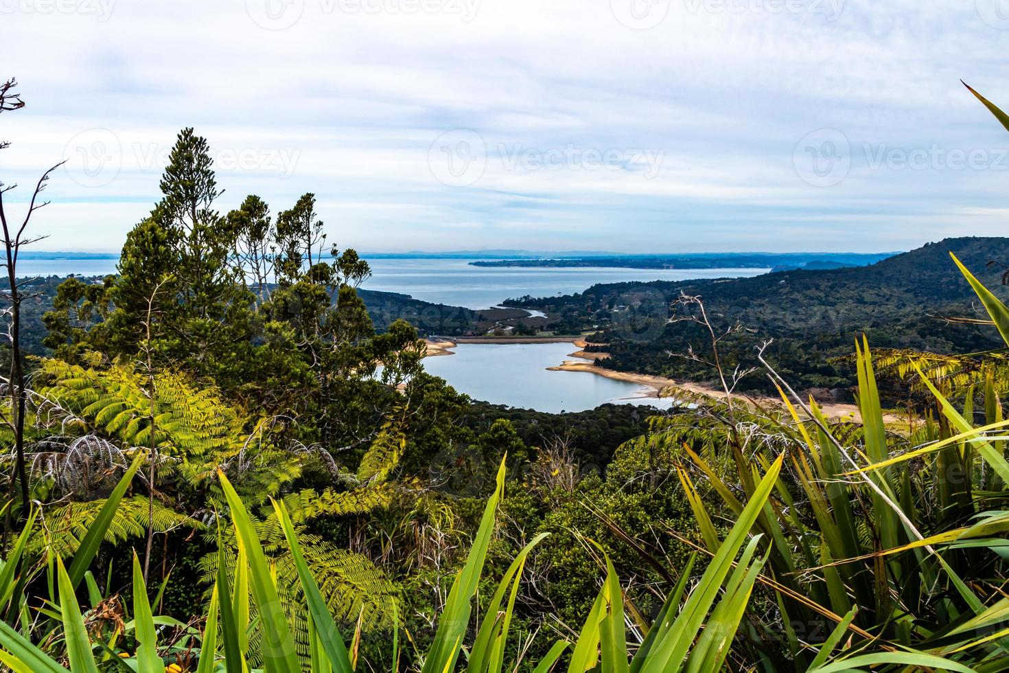 Views of Manukua Harbour from Waitakerie Ranges, North Island, New Zealand photo