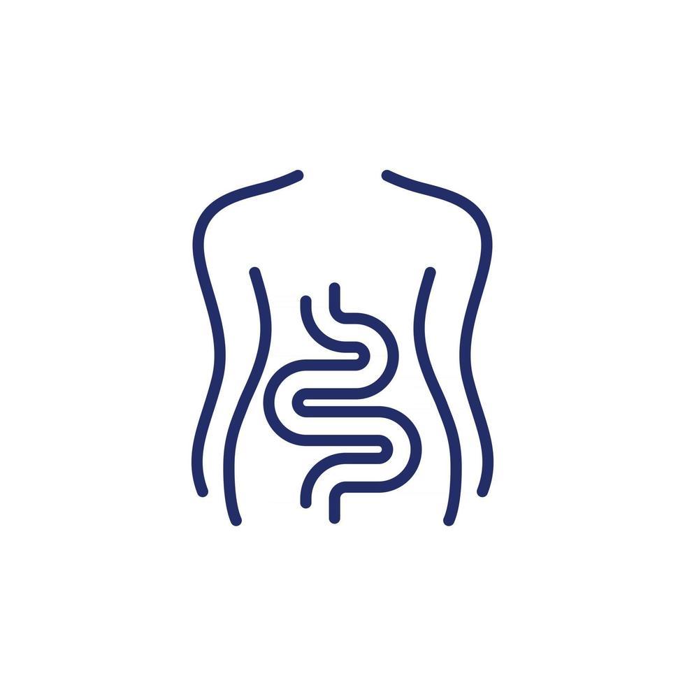 Intestines, colon line icon on white vector