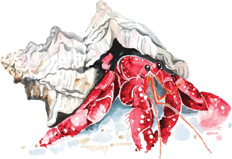 hermit crab with watercolor vector