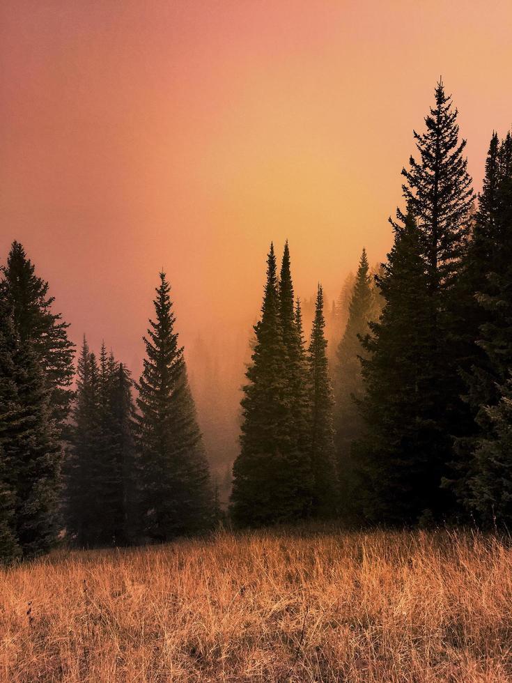 Sunset colors through fog photo