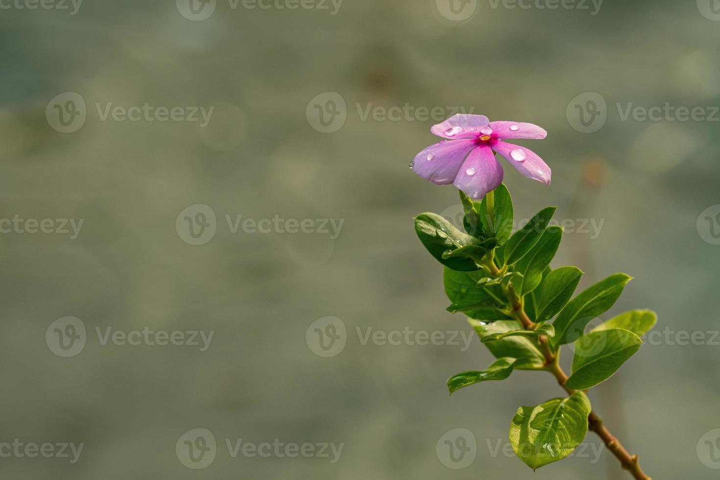 Beautiful flower background, colorful nature photo