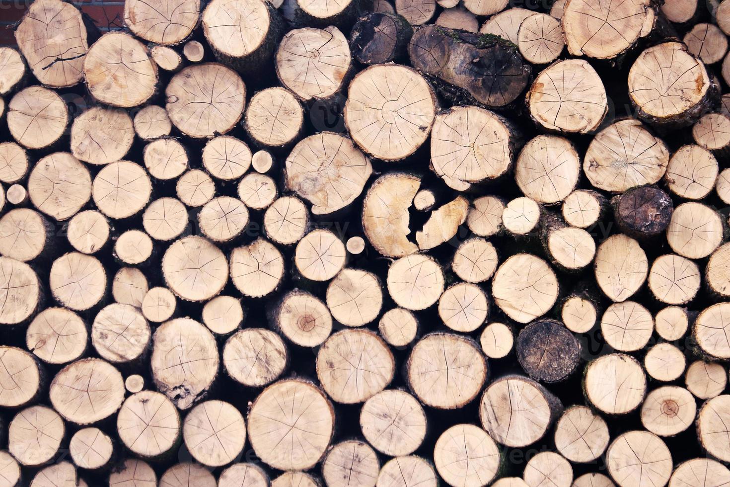 Stacked newly chopped wood logs wall background photo