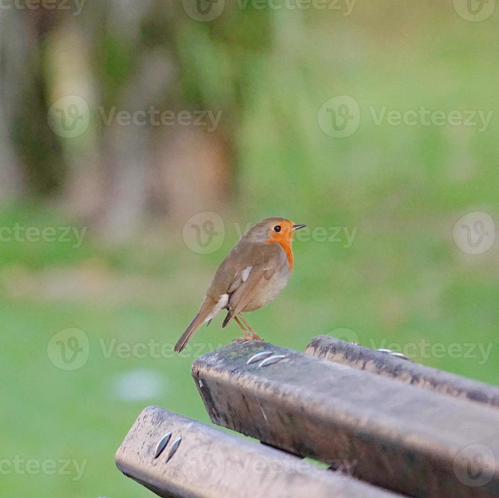Bird in the nature photo