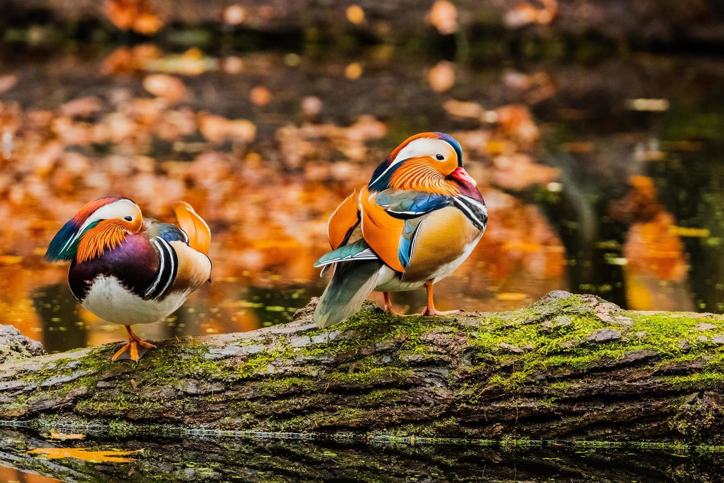 cerca de pájaro salvaje foto
