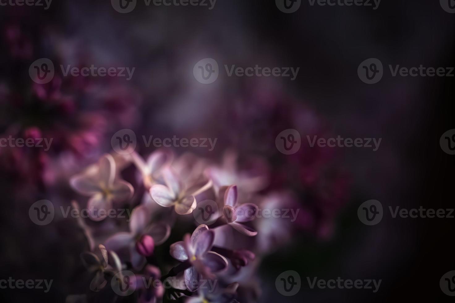 Imagen cercana de flores lilas en primavera foto