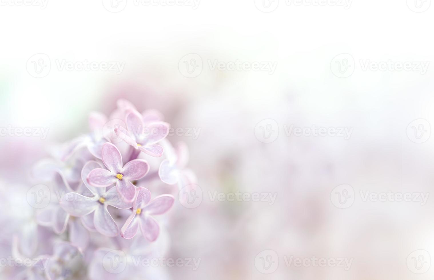 Close-up image of lilac flowers in springtime photo