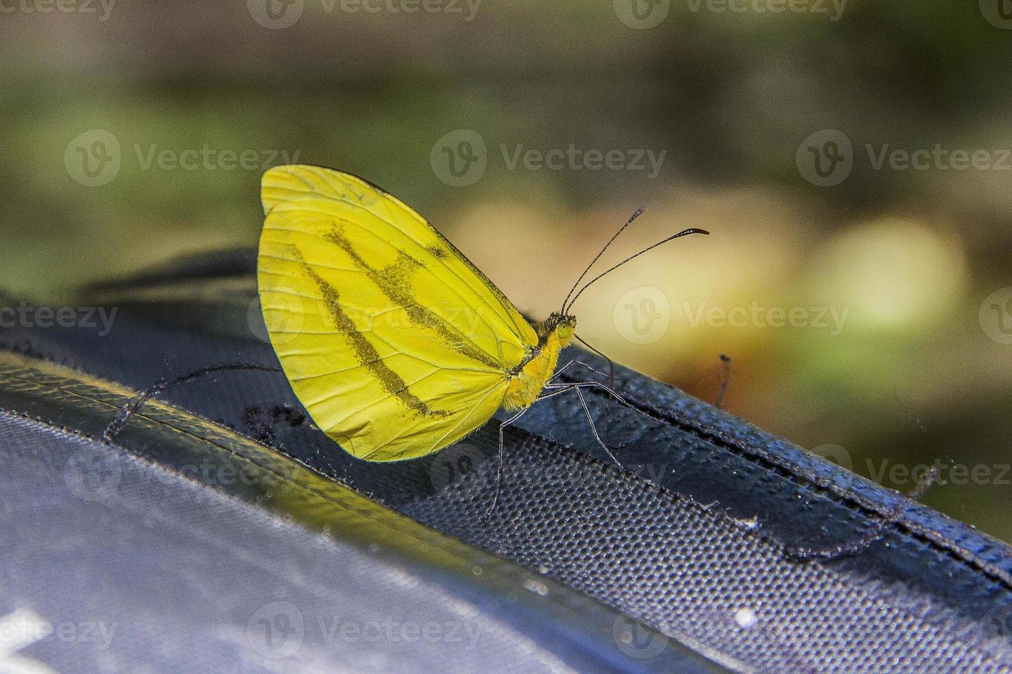 butterflies and insects photo