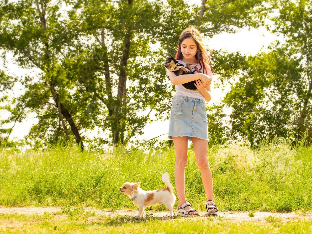 Girl with two chihuahuas in summer. Cute teenage girl on a sunny day. girl, pet. walk, animal, photo