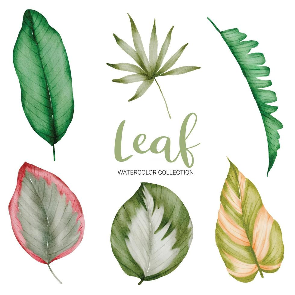 Many kinds of beautiful leaf in water color style vector