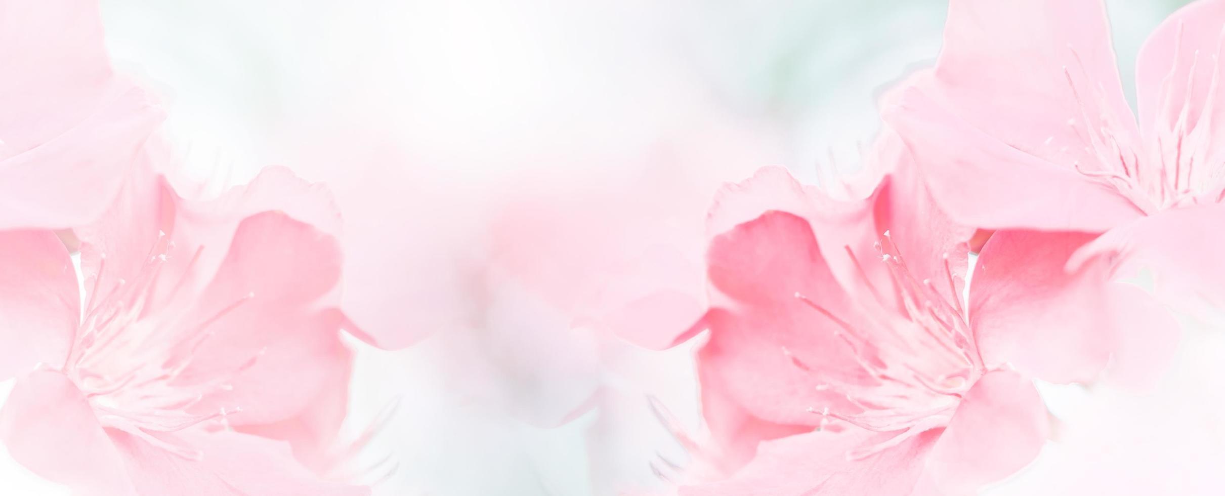 Fondo de rama de flor de primavera hermosa rosa roja con espacio de copia libre para tarjeta de felicitación o portada ambiental, plantilla, banner web y encabezado. foto