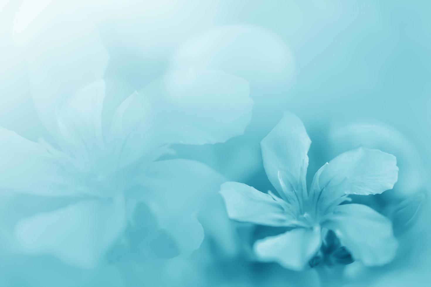 Pastel blue green beautiful spring flower bloom branch background with free copy space for greeting card or environment cover page, template, web banner and header. photo