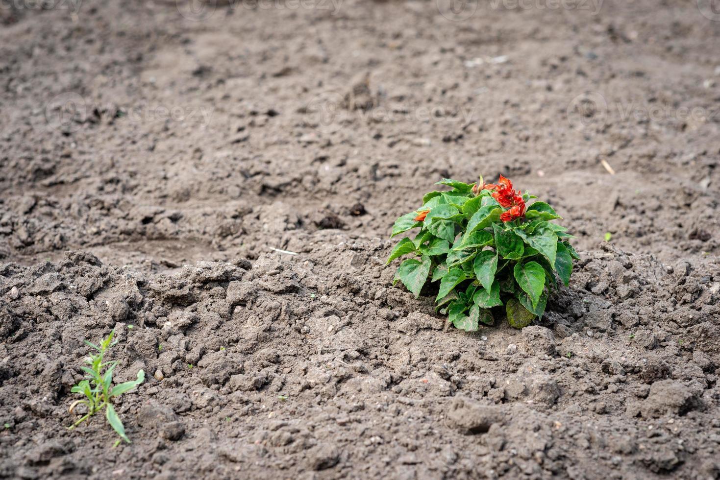 Fotografía de enfoque selectivo. suelo tratado con una planta solitaria. foto