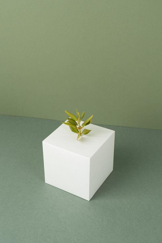 The sustainability concept with blank geometric forms growing plant photo