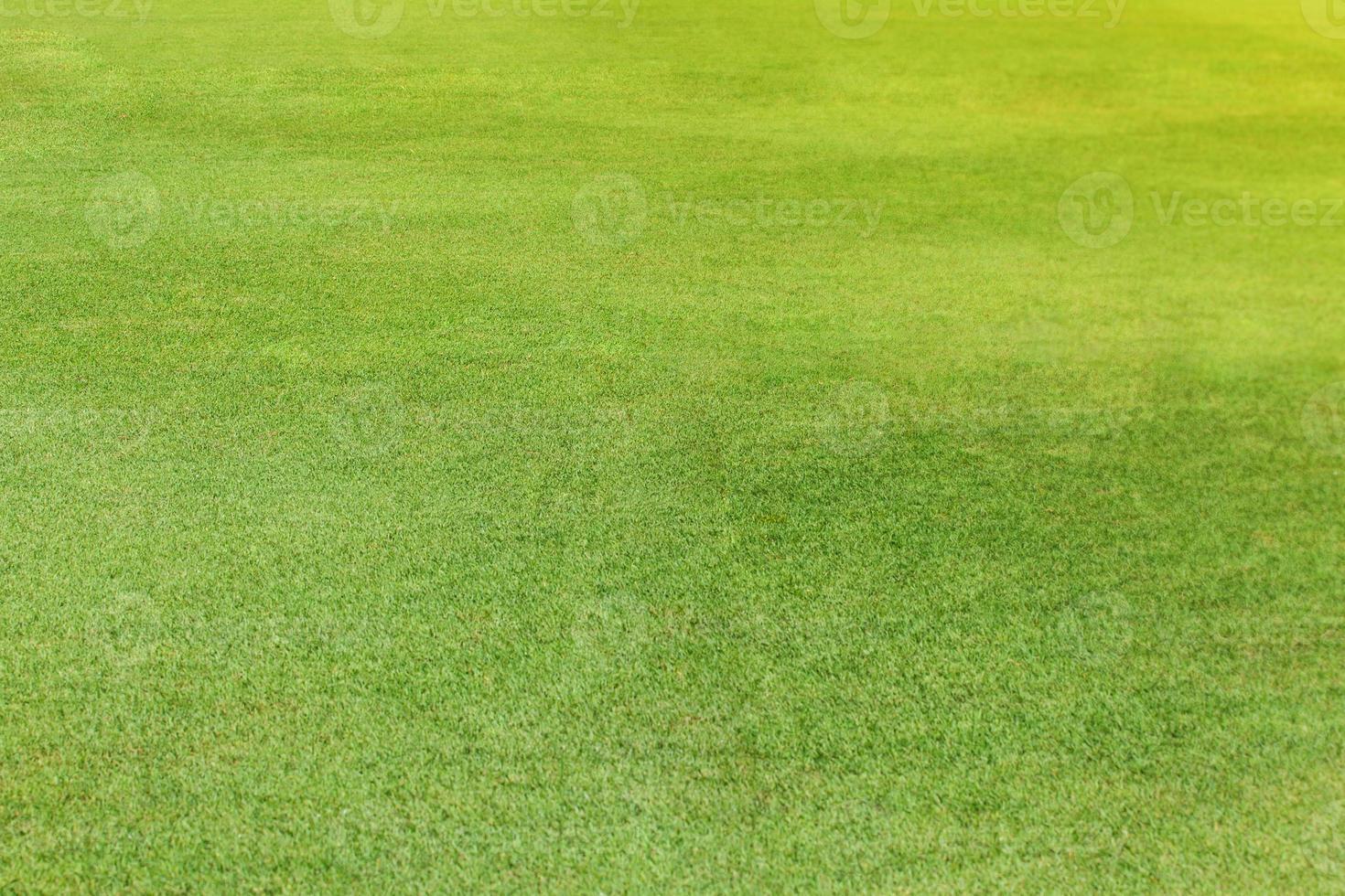 Green grass texture background photo