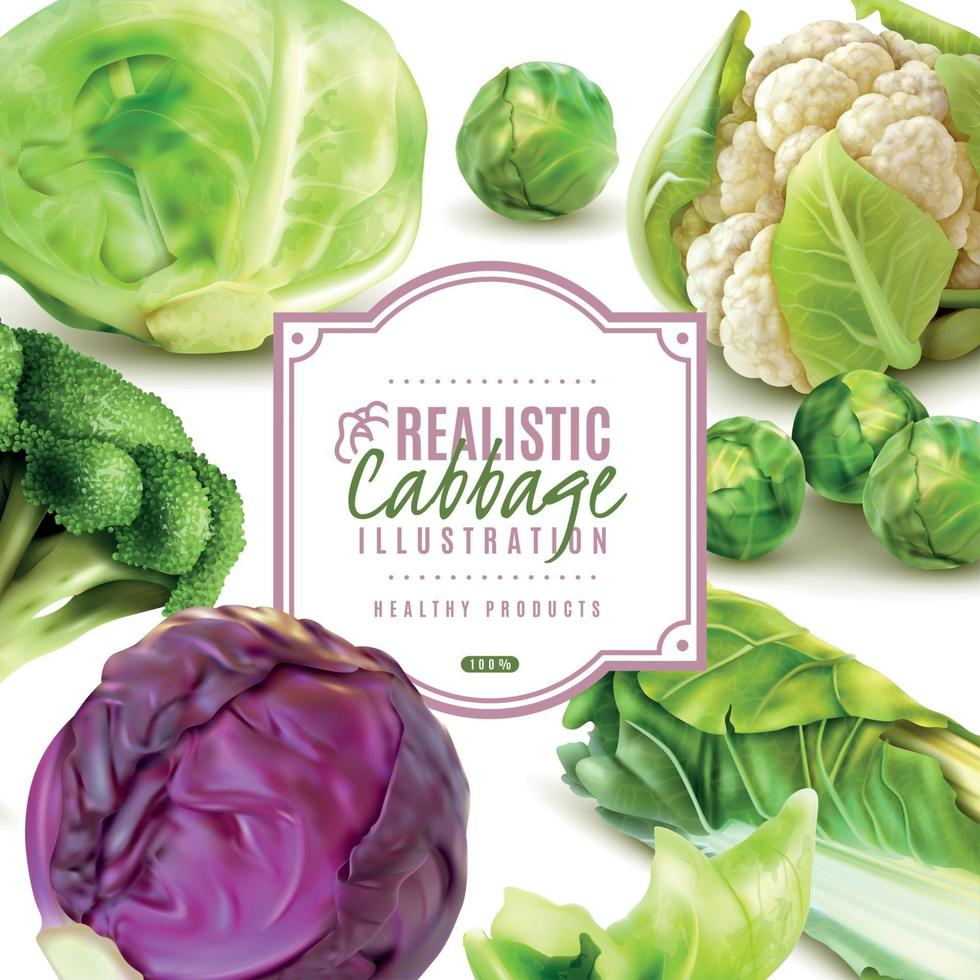 Realistic Cabbage Frame Vector Illustration