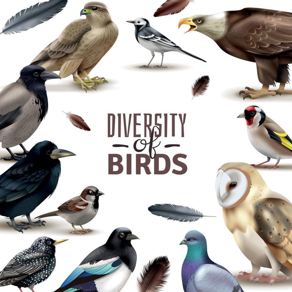 Birds Diversity Frame Composition Vector Illustration