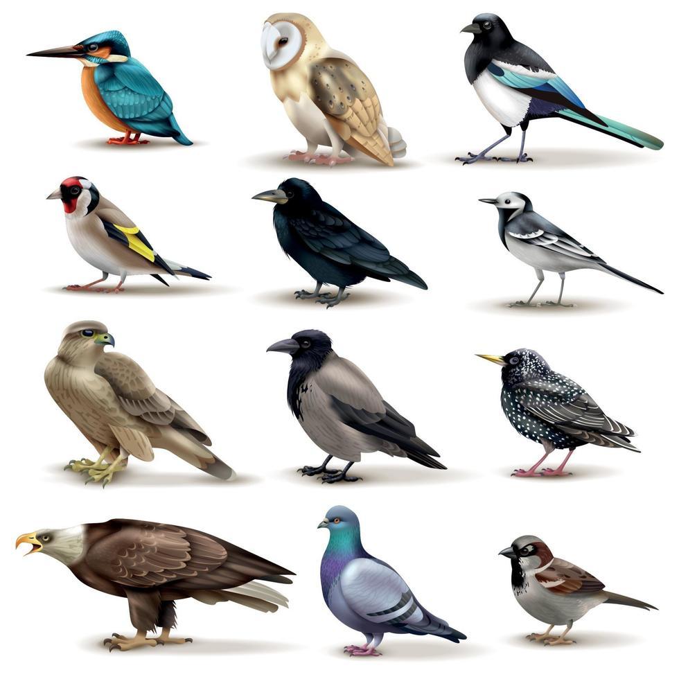 Birds Realistic Fauna Collection Vector Illustration