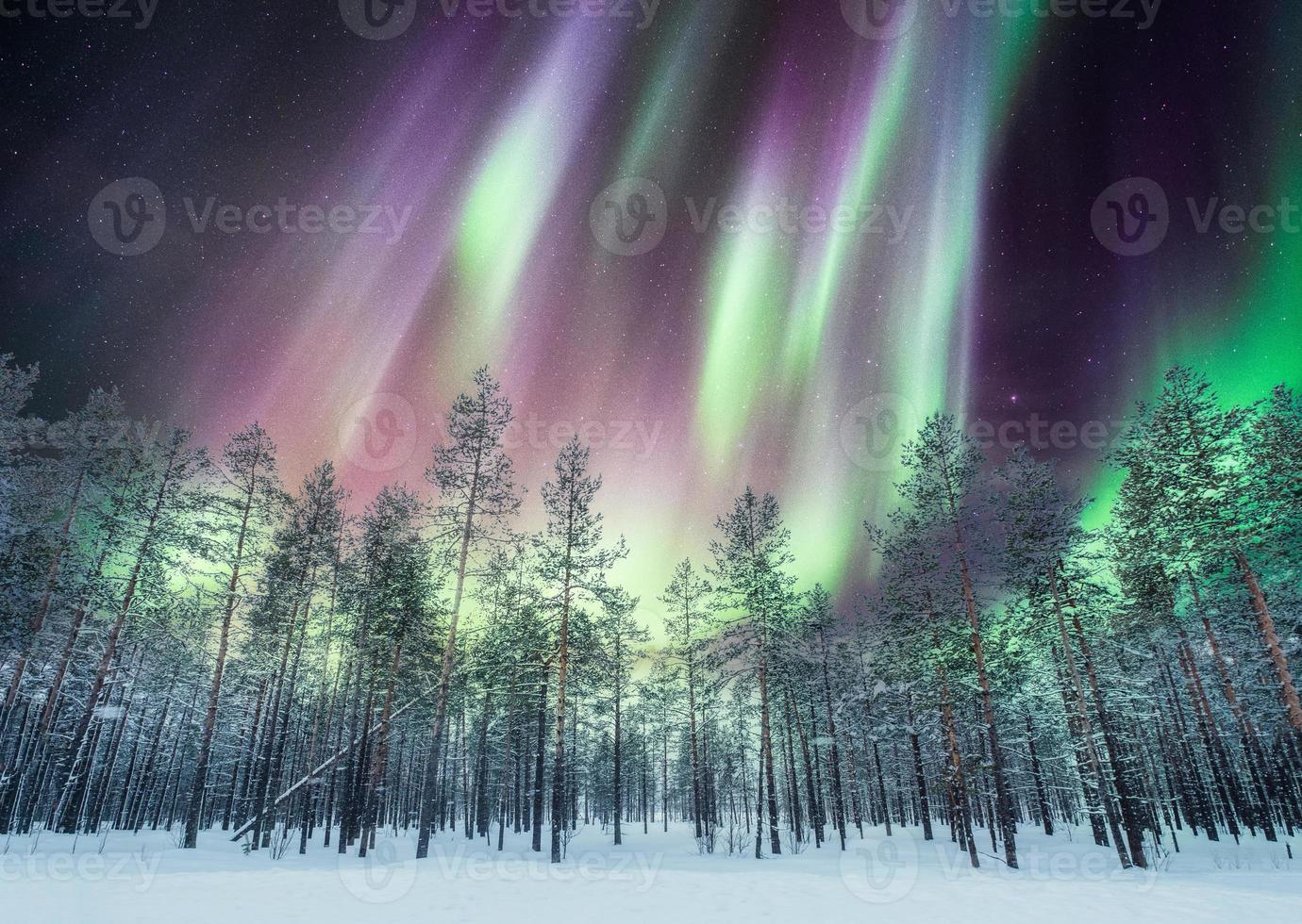 Aurora borealis over pine forest on snow photo