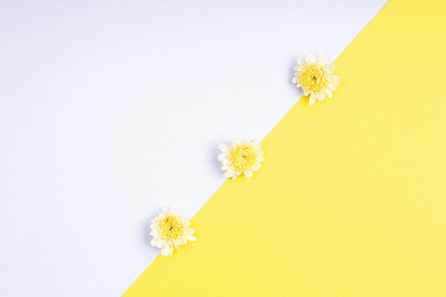 Beautiful blooming fresh flower isolated on paper background photo