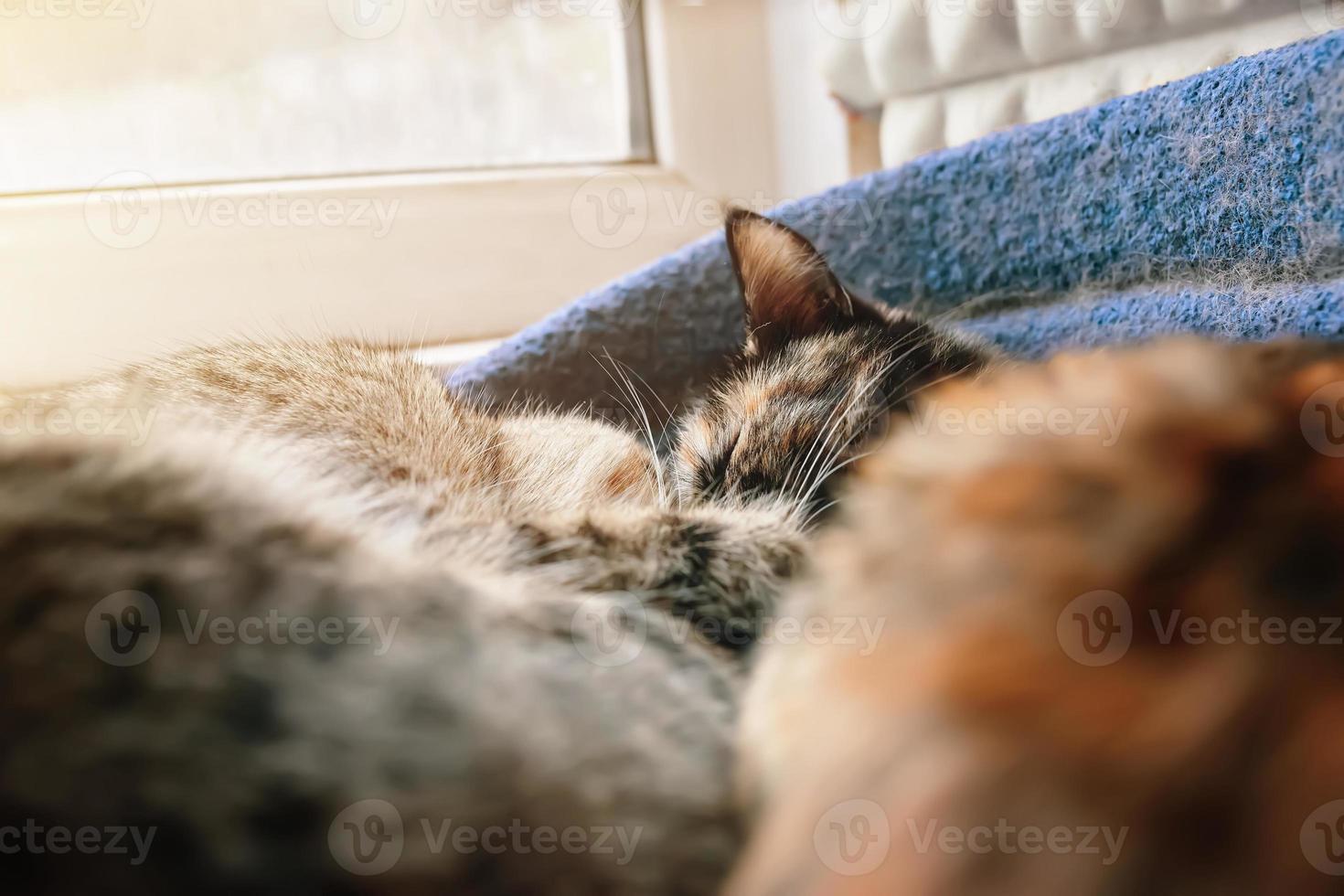 Two cute cats sleeping in pets sofa near window. photo