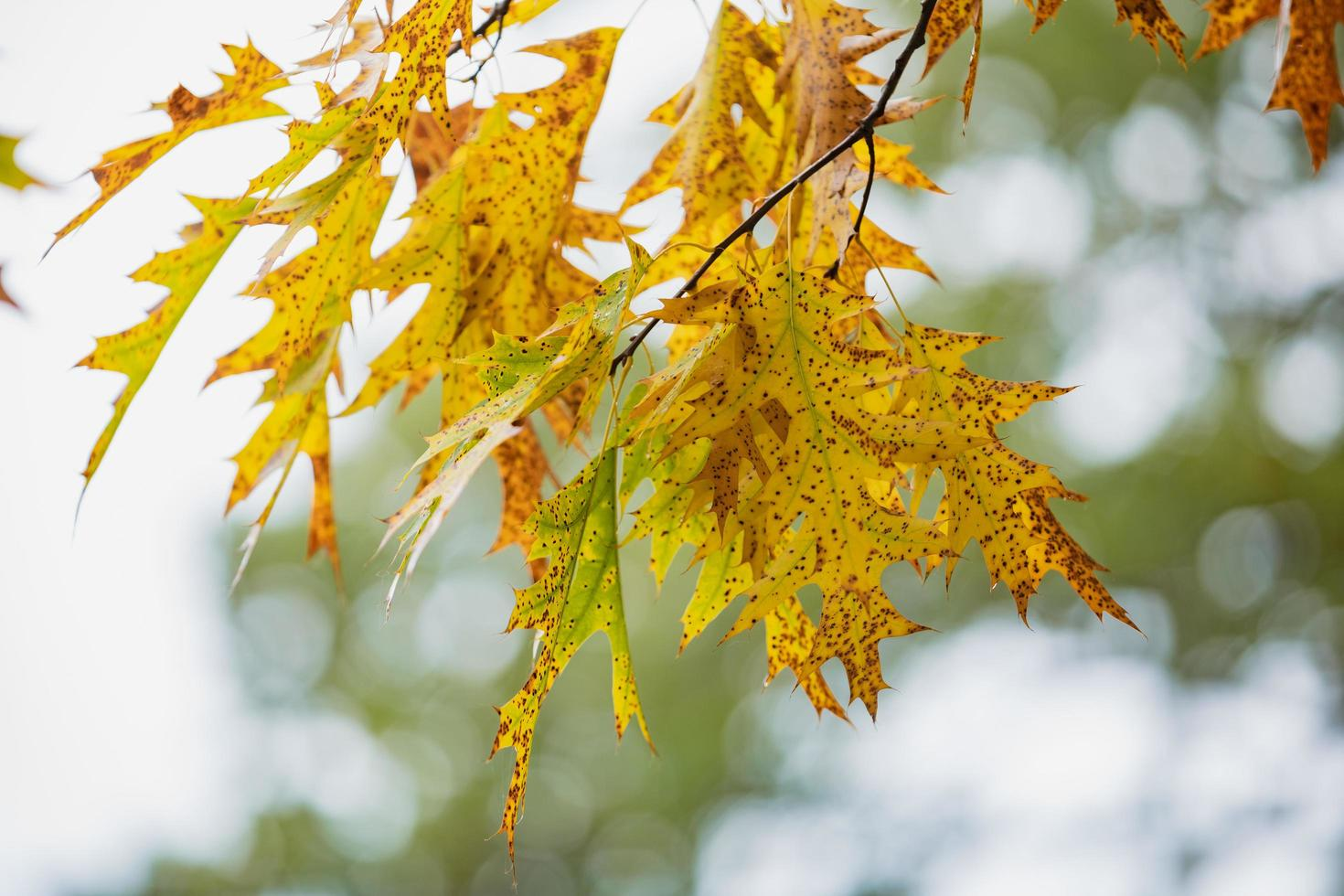 Autumn maple leaves and blue sky background outdoor photo