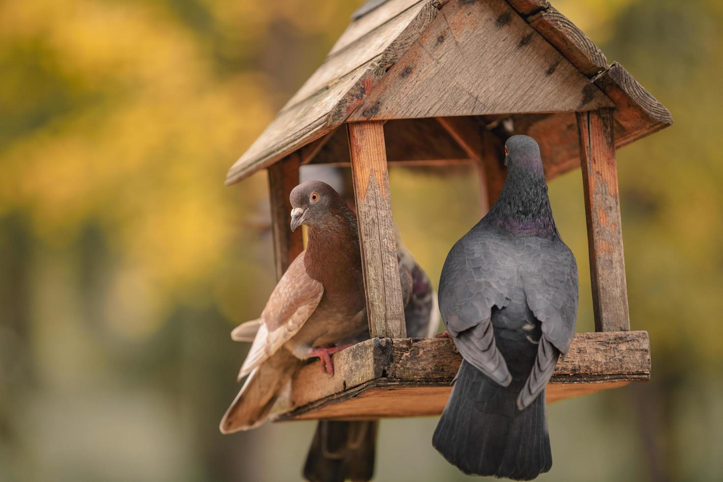 dos palomas están sentadas en un comedero para pájaros en forma de casa foto