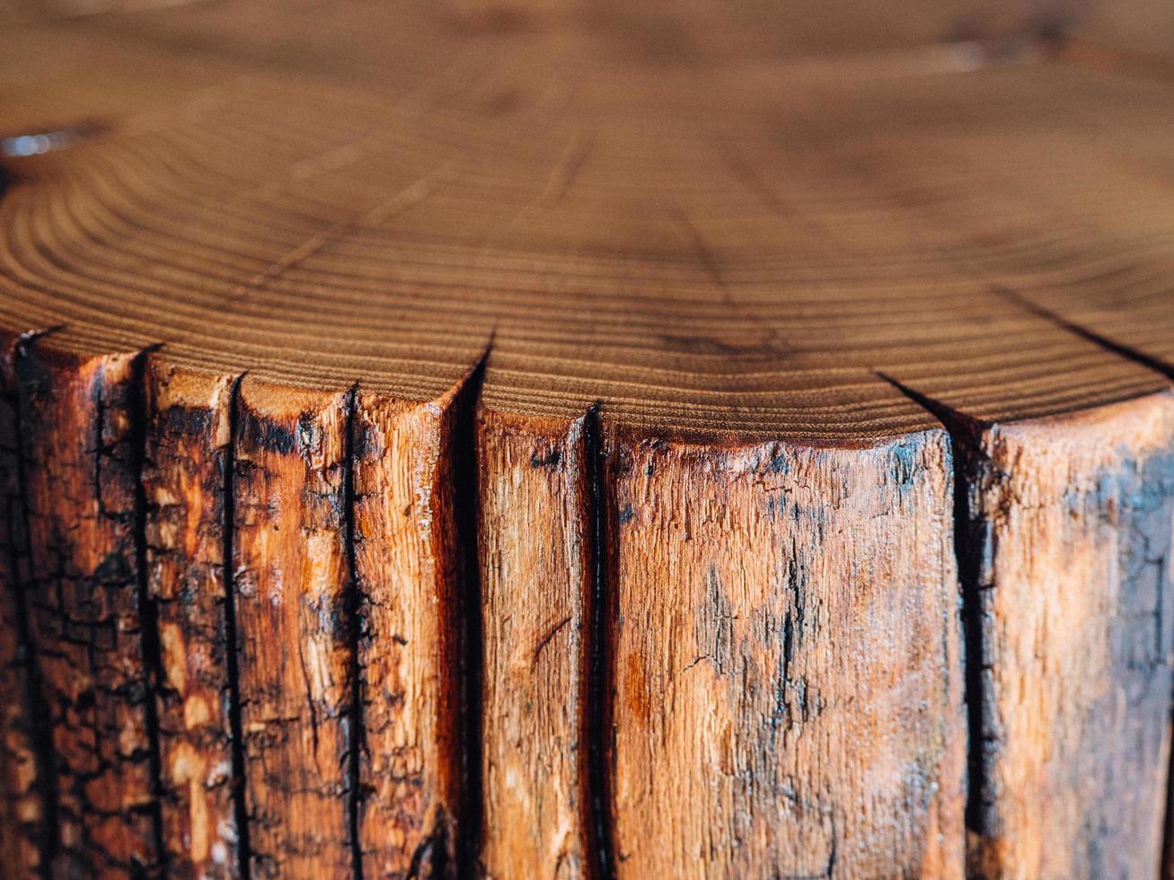 a close-up of a saw cut of a large acacia stump photo