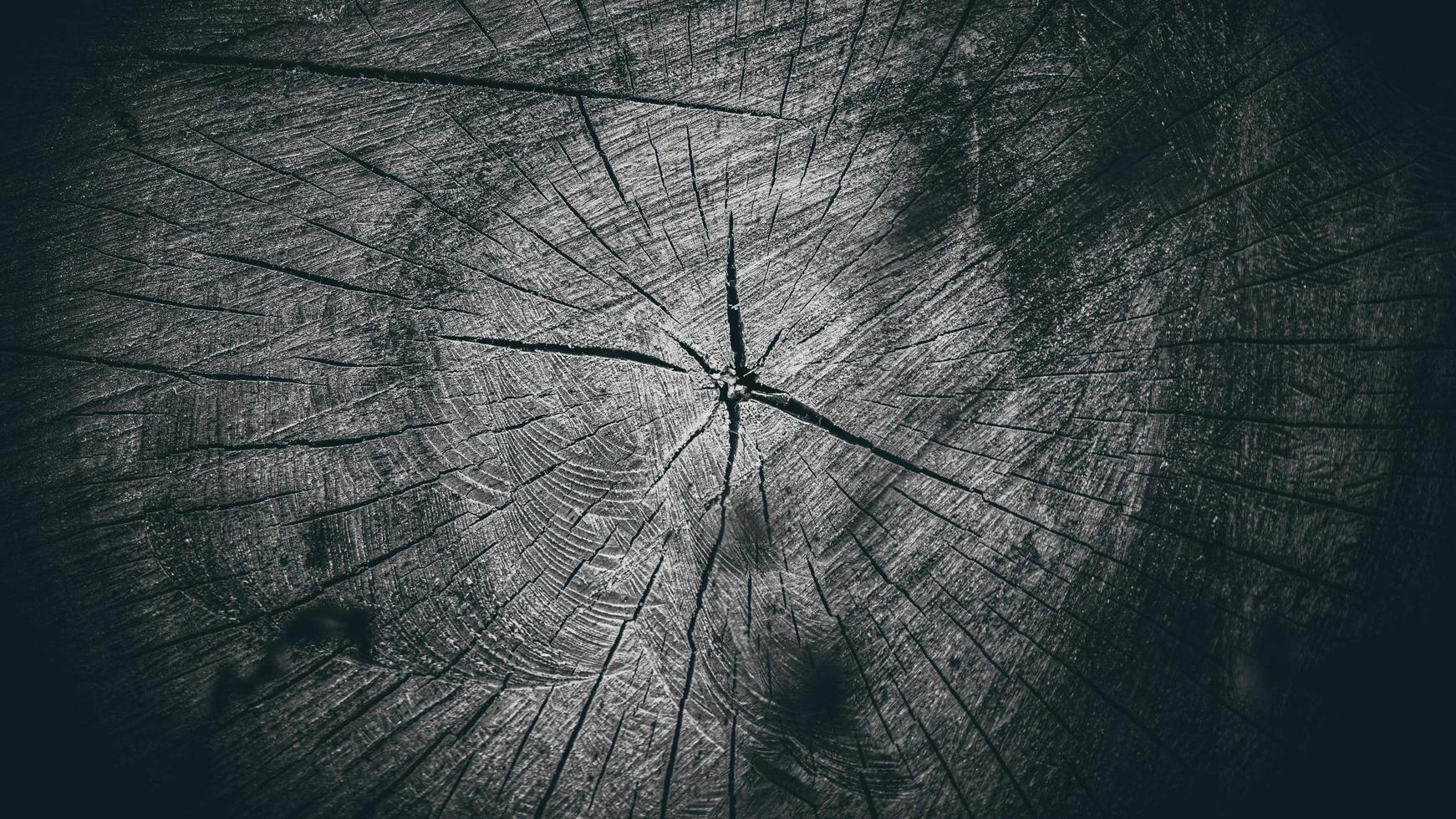 beautiful dry wood stump. cracked wood texture photo