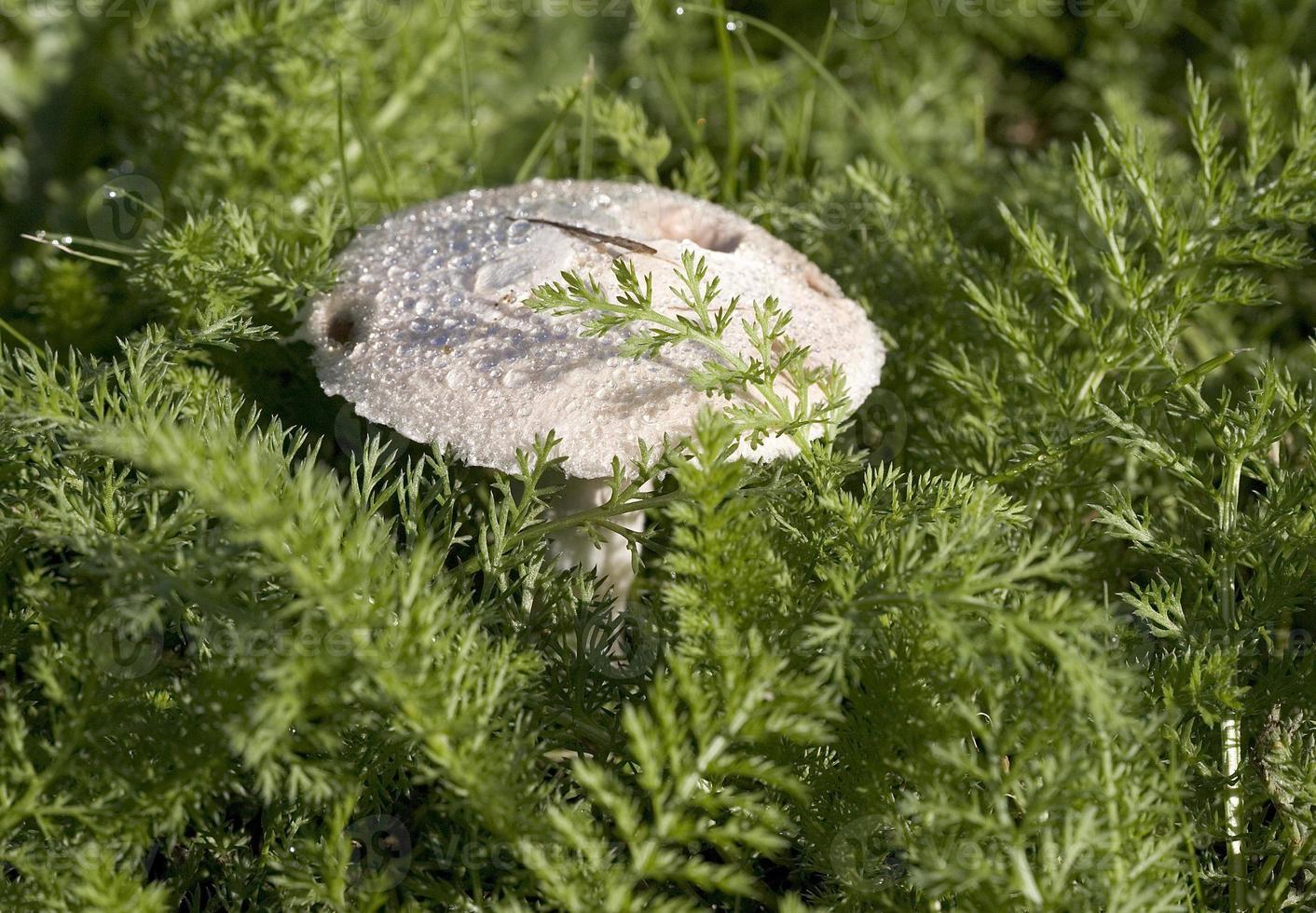 Mushroom in autumn photo