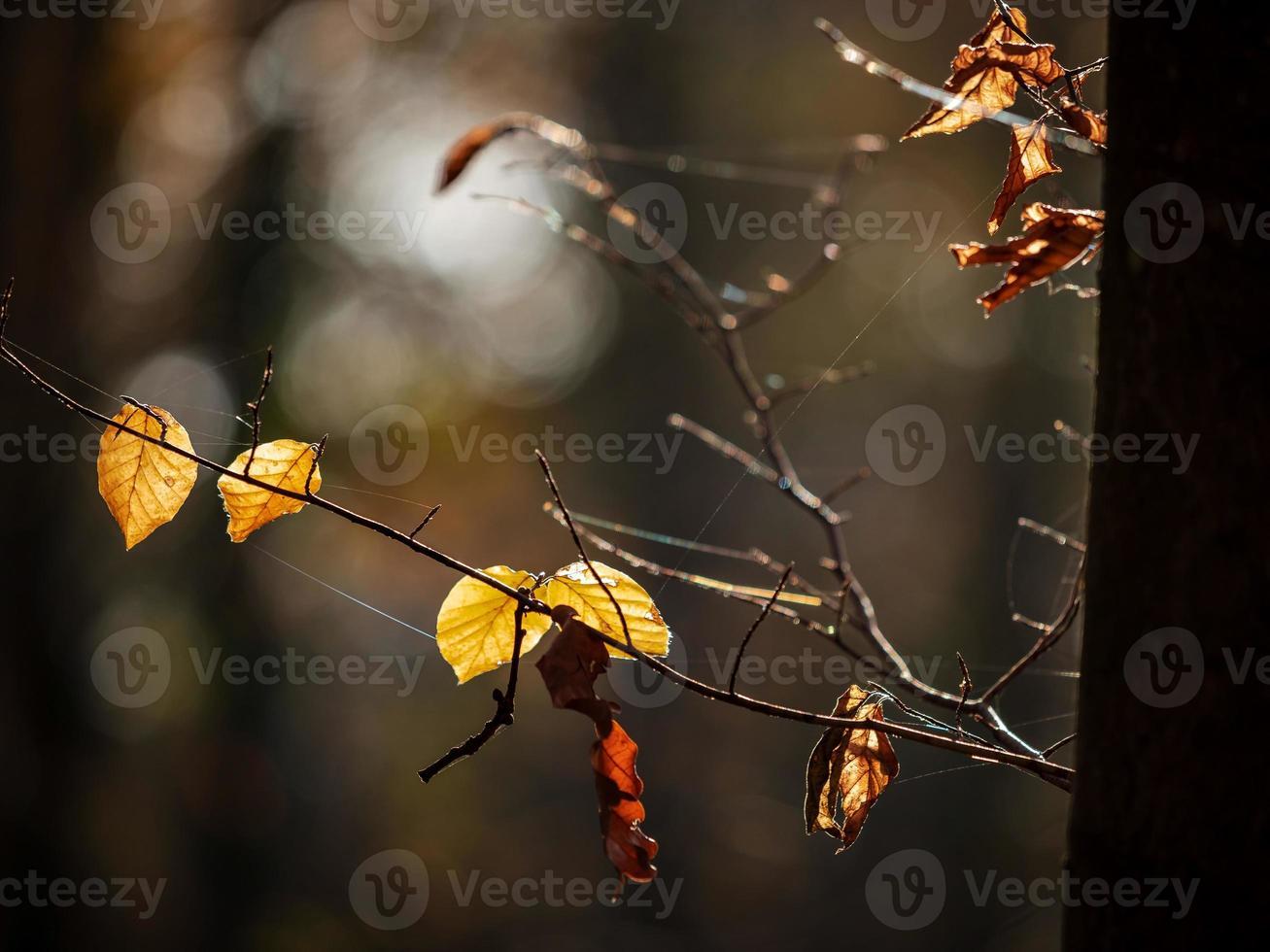 clima soleado en el bosque foto