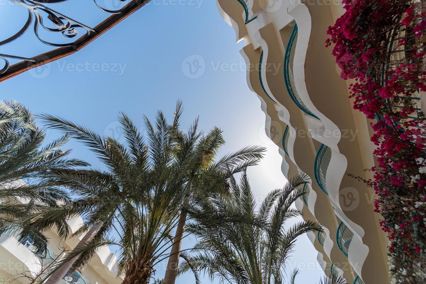 bottom view of palm leaves against blue sky photo