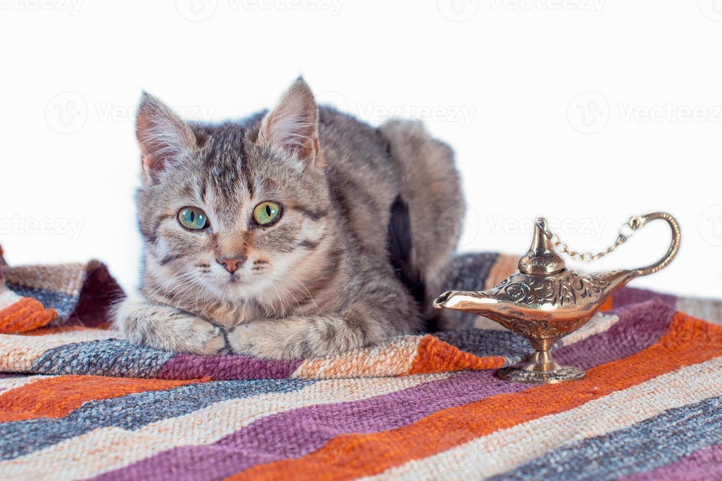 tabby cat with oriental carpet and brass lamp photo