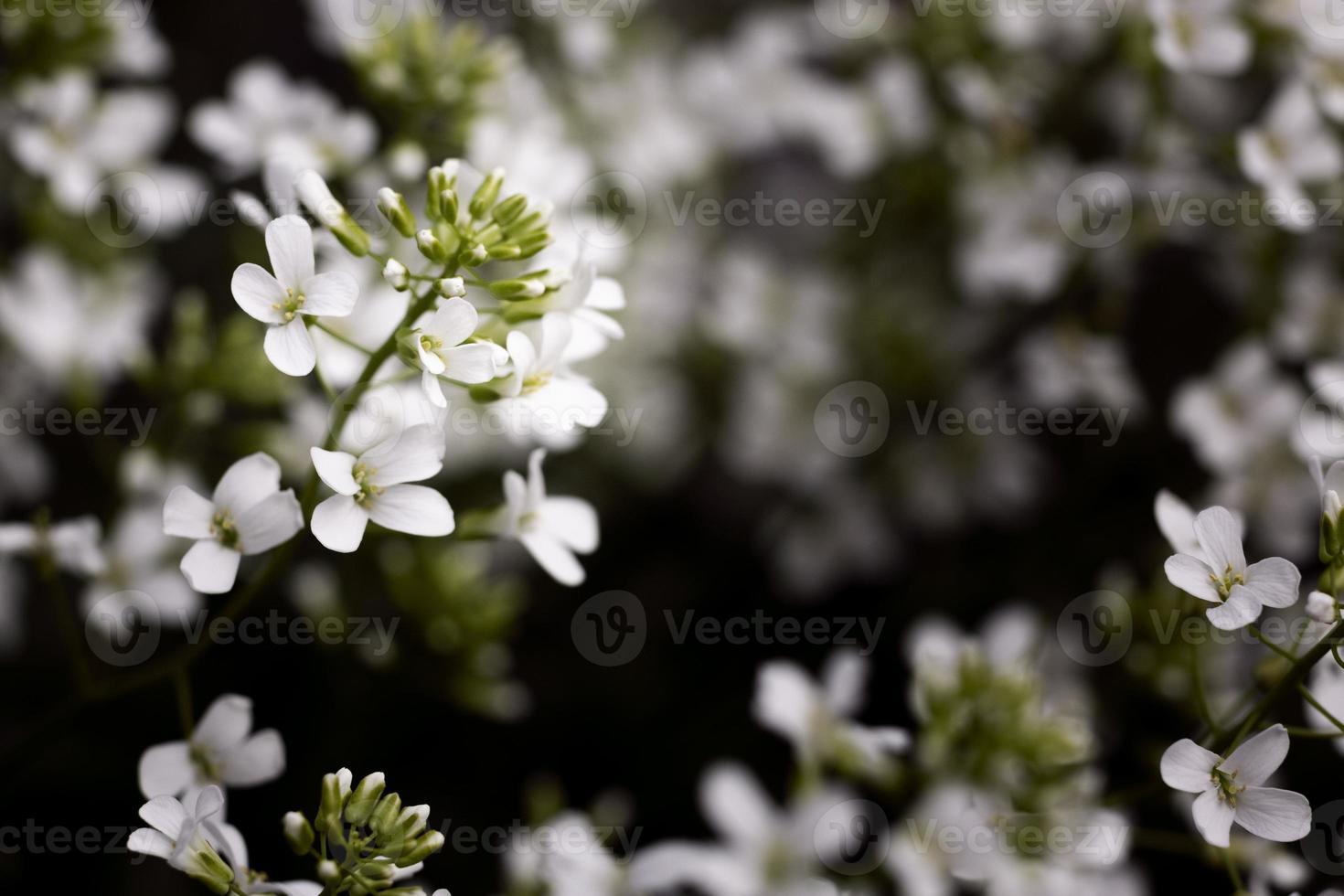 Close up beautiful flowers details nature photo