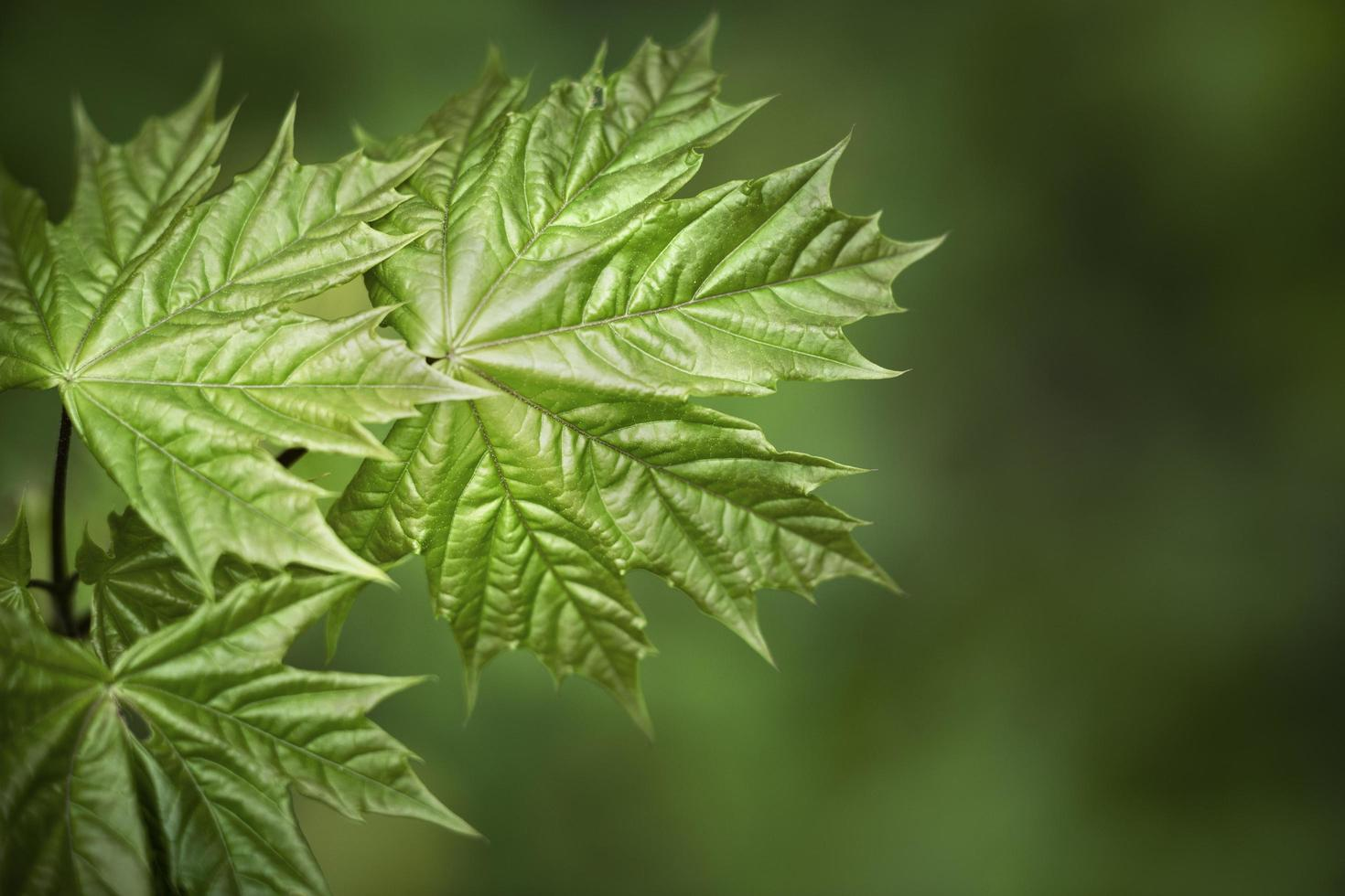 Close up green leaves nature photo
