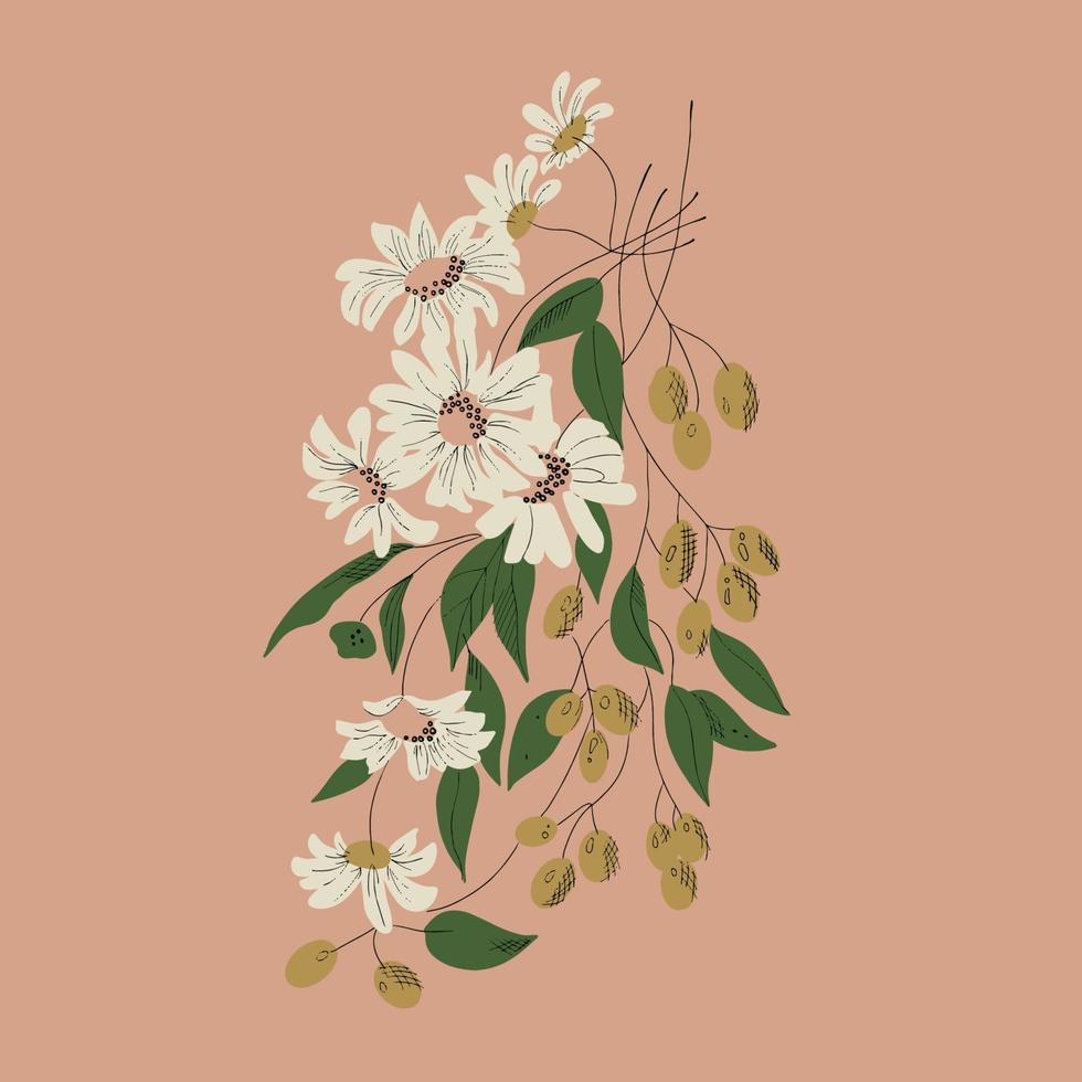 Vector white flower olives botanical drawing illustration