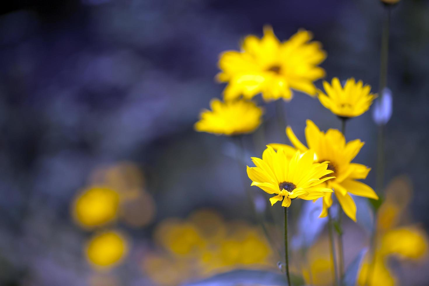 hermosa planta flores amarillas en la naturaleza foto
