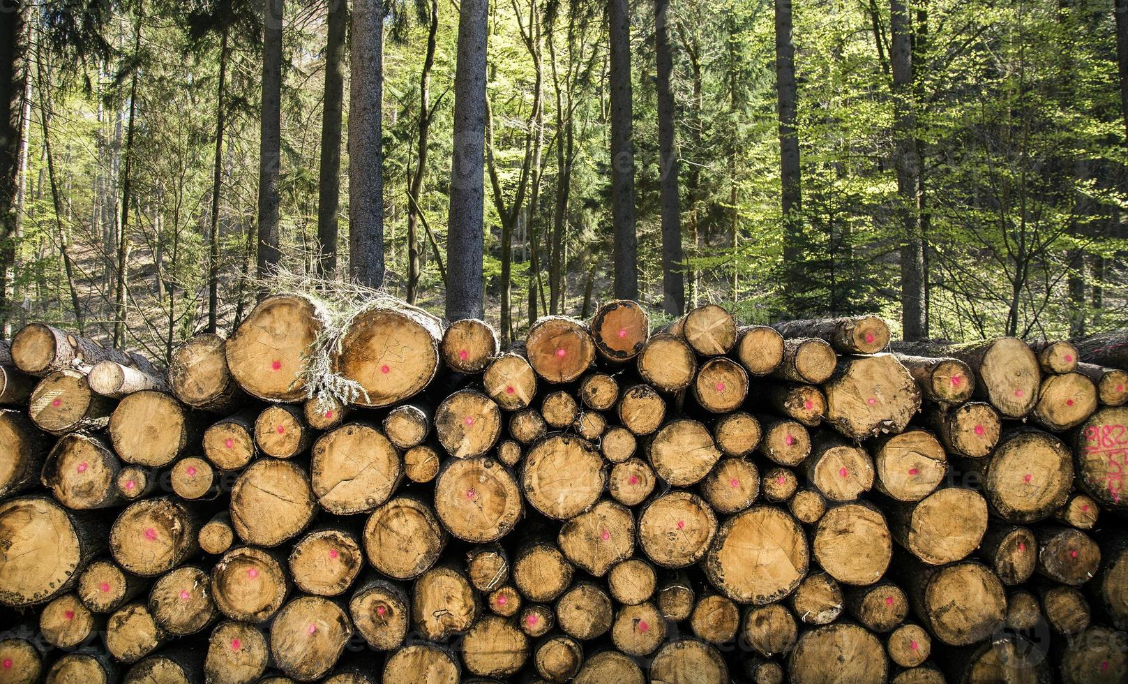 Tronco de madera cortada en el bosque en la naturaleza foto