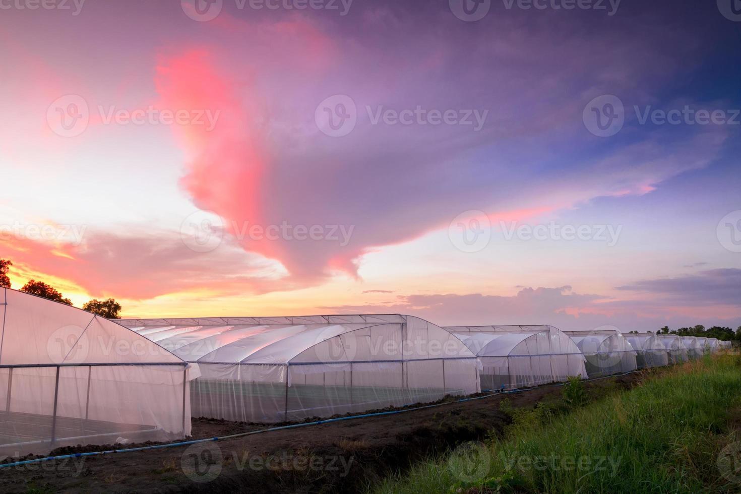 invernadero en la granja al atardecer hermoso foto