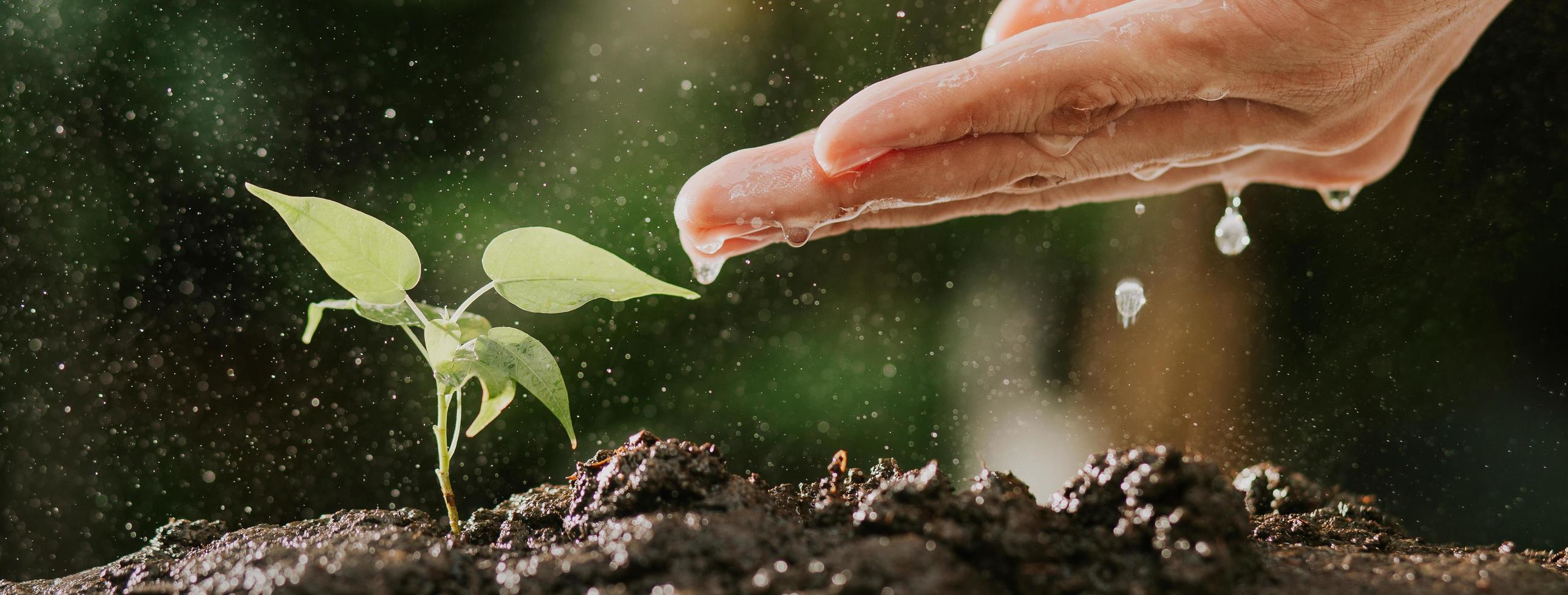 Plant watering banner photo
