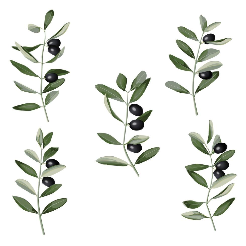 Olive Branch Set in watercolor style. Vector pattern