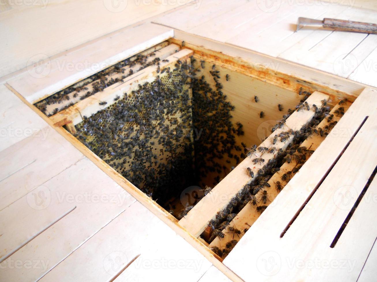 Fondo de textura hexagonal, panal de cera de una colmena llena foto