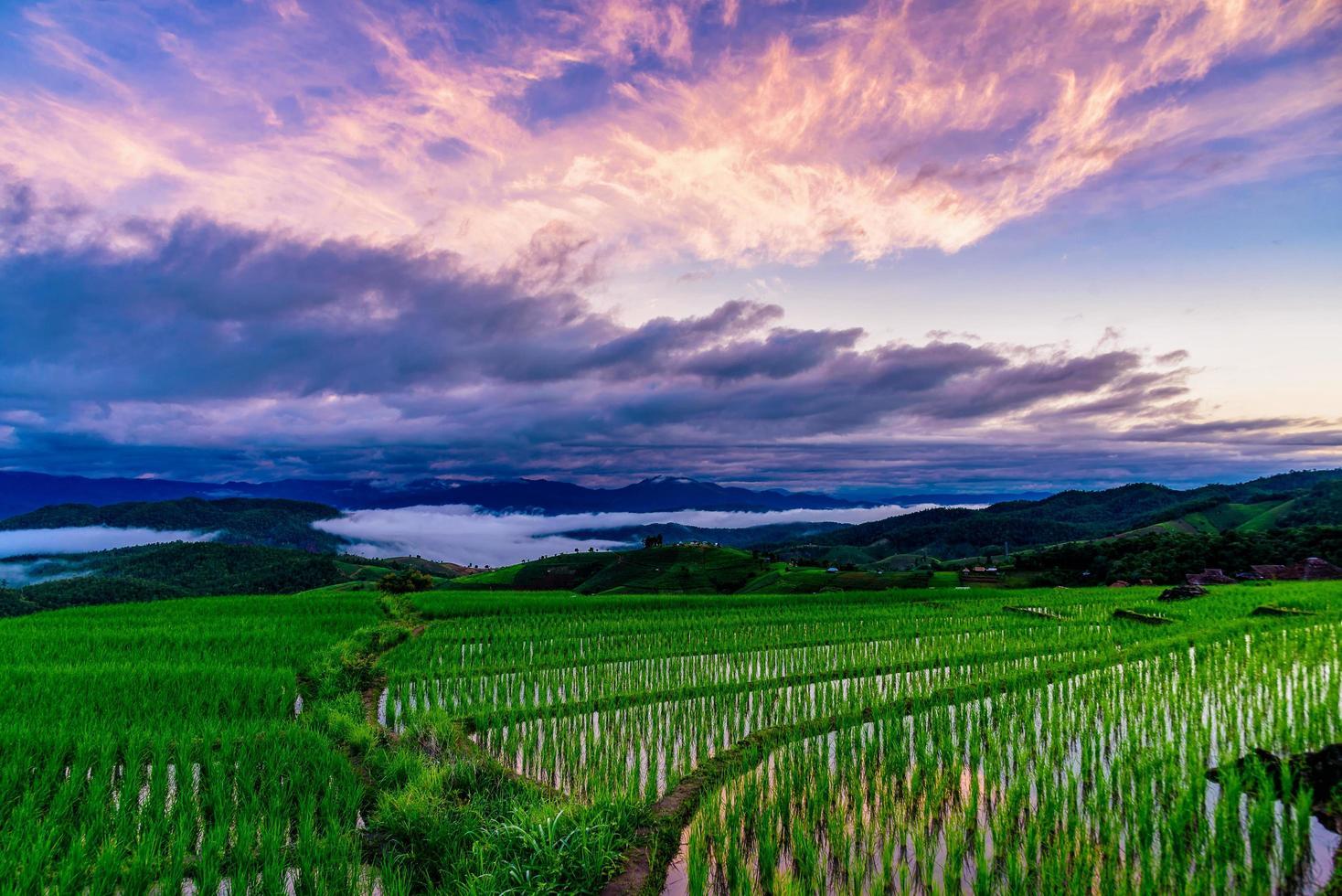 Campos de terrazas de arroz en la aldea de pa bong piang chiang mai, tailandia. foto