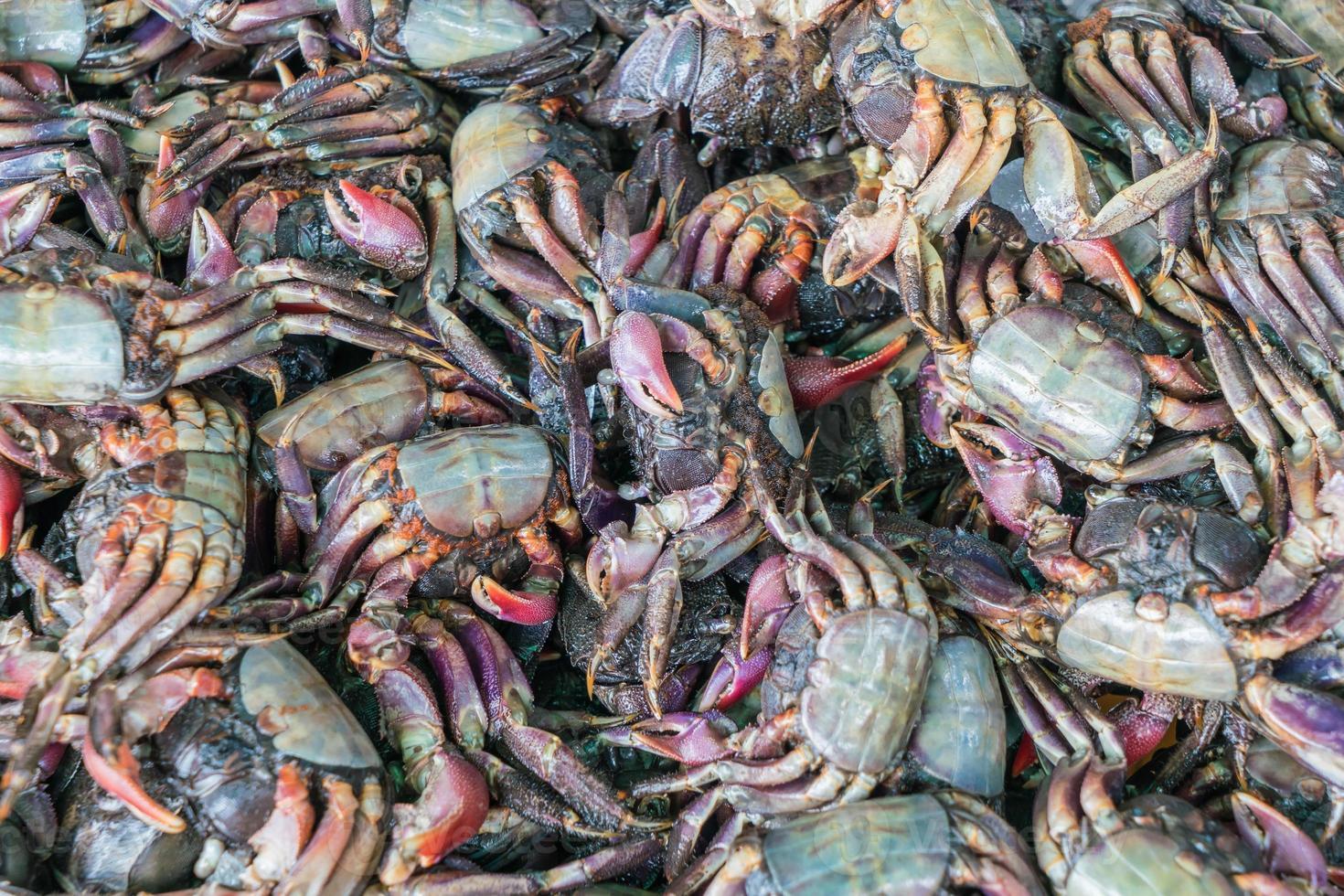 Fresh black crab at the market photo