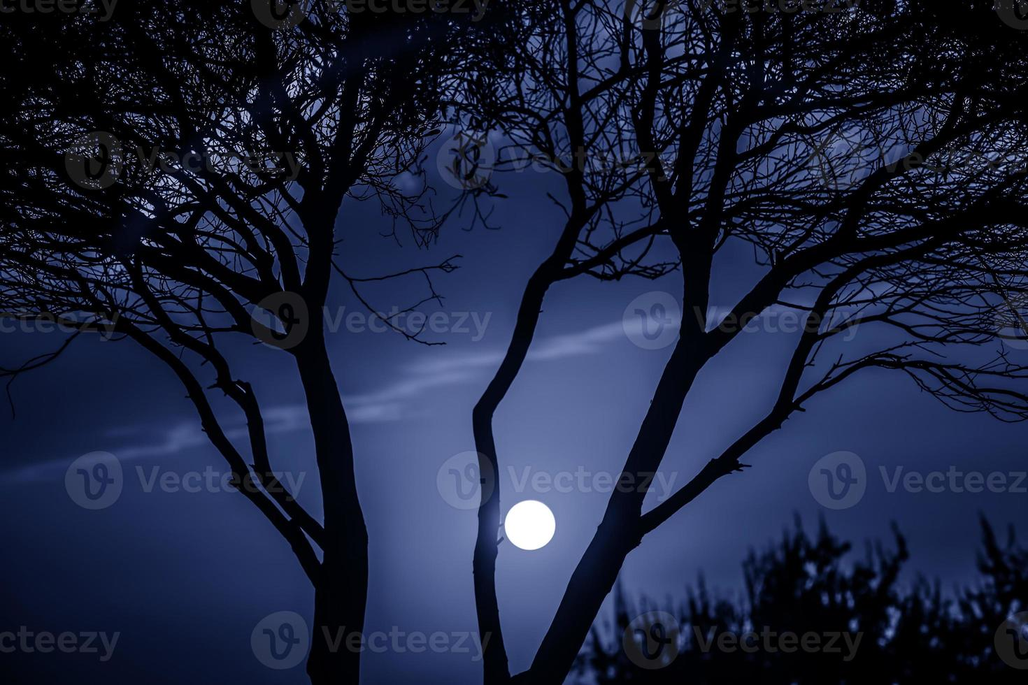 Trees in Nature in Park at Night photo