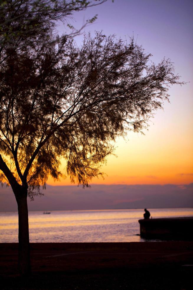 árbol y un hombre solitario cerca de la playa. foto