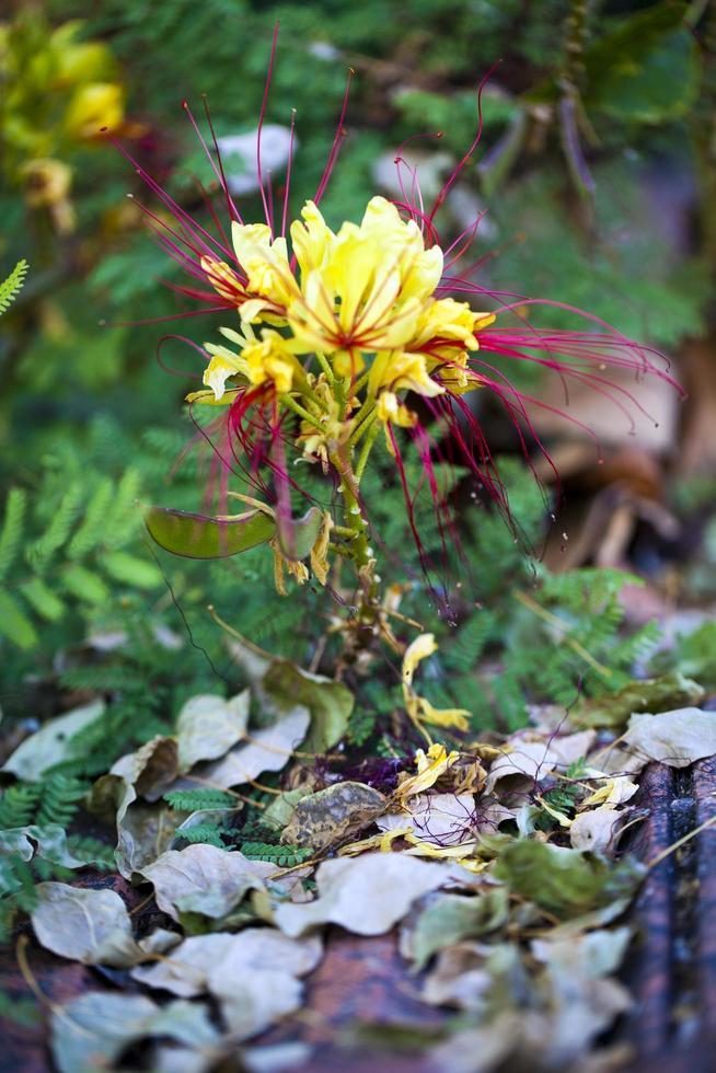 coloridas flores y hojas de flora romántica viva foto