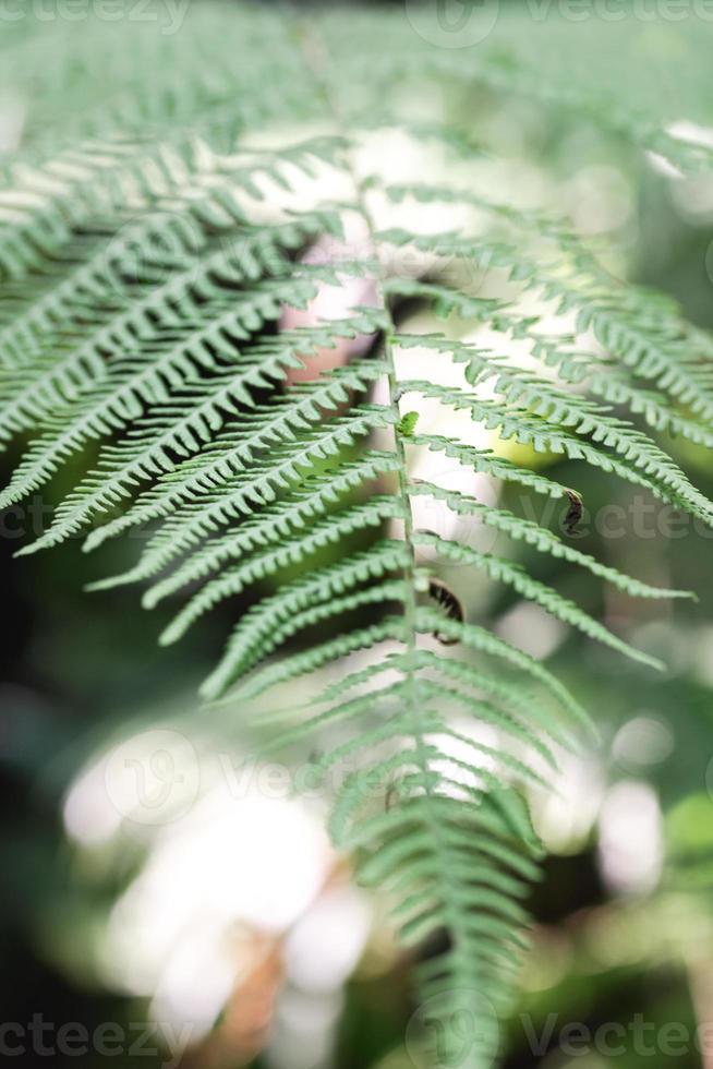 Fern leaf pattern in the wild photo