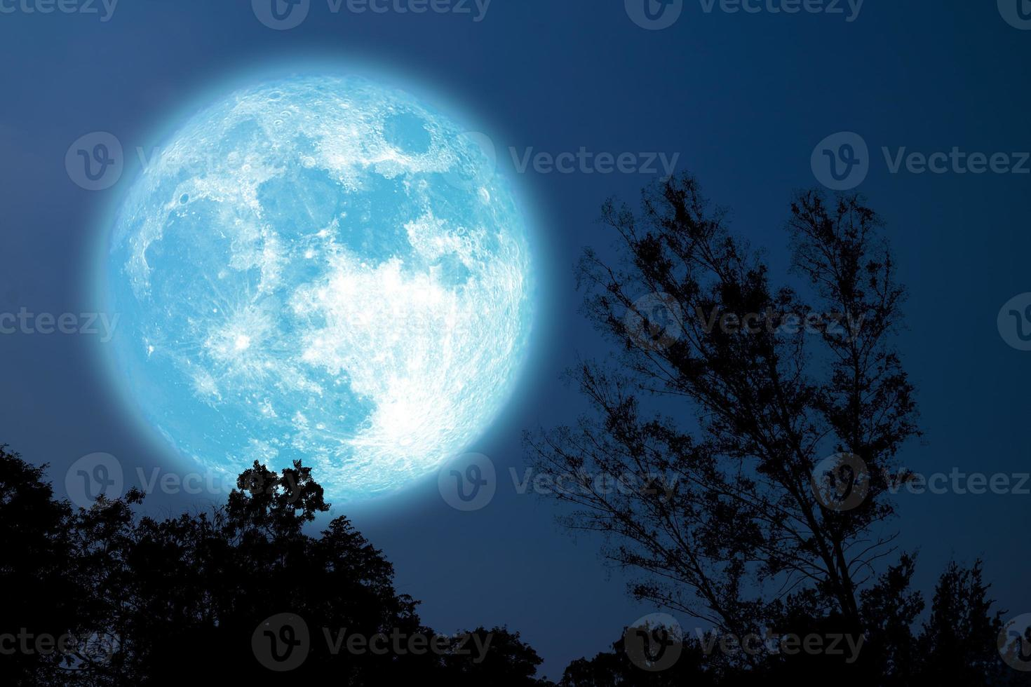 Árbol de silueta de luna azul de grano completo en el campo en el cielo nocturno foto
